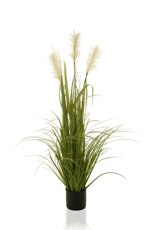 Planta Taboa - 130Cm Altura