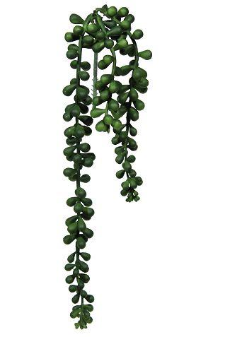 Suculenta pendente - 40cm Altura X 8cm Largura  - 3 Ramos