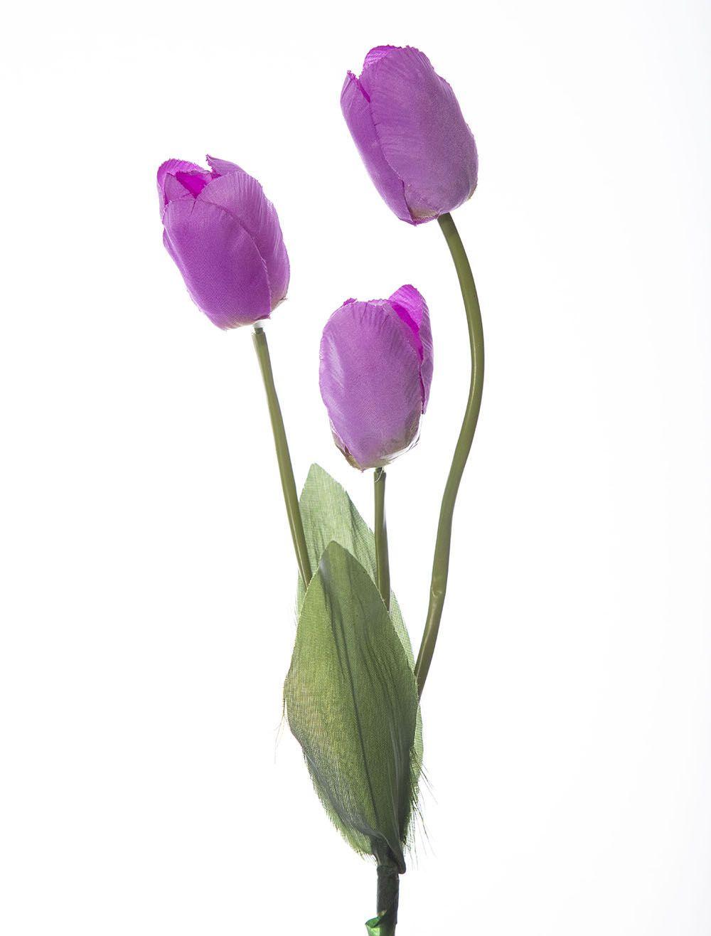Tulipa X3 Fa310810