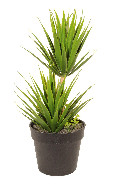 Vaso Planta Suculenta Unidade