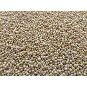 Semente De Mostarda Amarela Em Grãos Produto Natural A Granel 100g