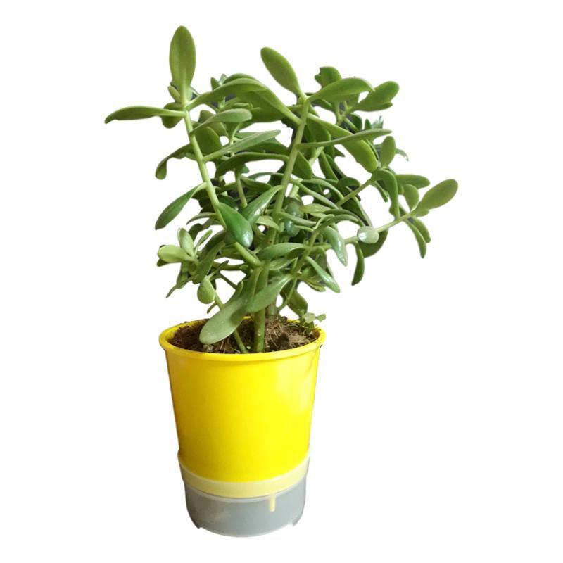 Kit Com 3 Vasos Autoirrigáveis Amarelos + 3 Suportes Em Alumínio Natural