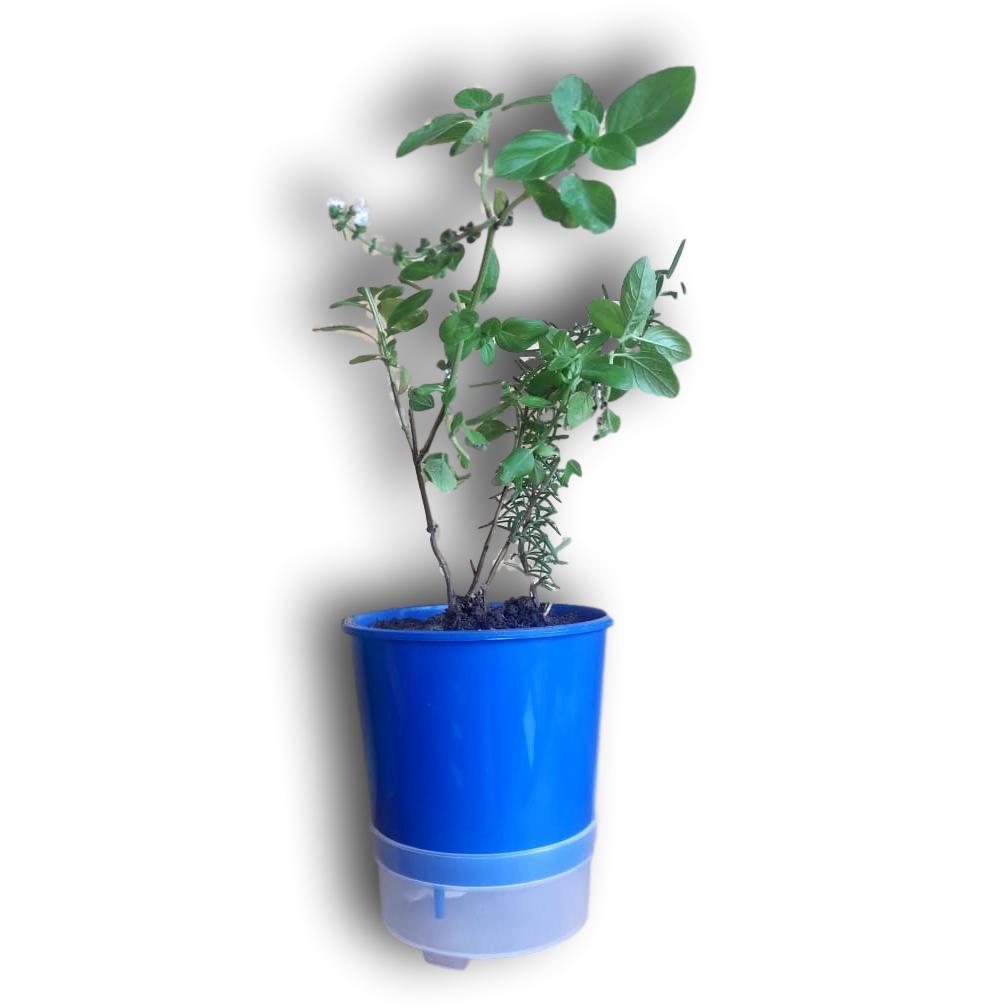 Vaso Auto Irrigável ou Autoirrigável 15 centímetros De Altura 30 Unidades + 30 Unidades De Suporte Em Alumínio Natural Para Revendedores