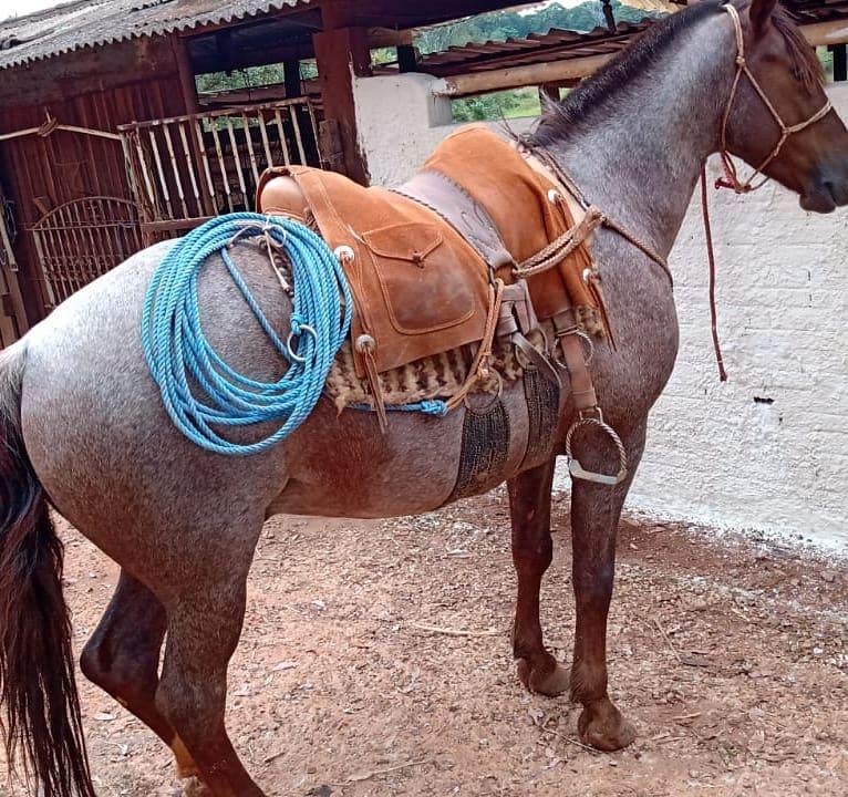 Baldrana De Vaqueta Abufalada 110x60 MODELO 3