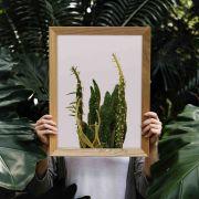 Quadro decorativo em canvas cactus