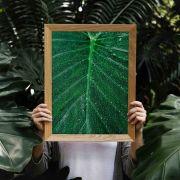 Quadro decorativo em canvas folha molhada