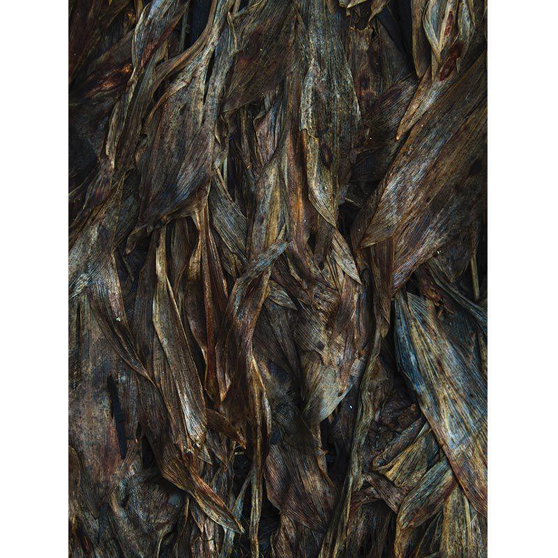 Quadro decorativo em canvas - Folhas mortas