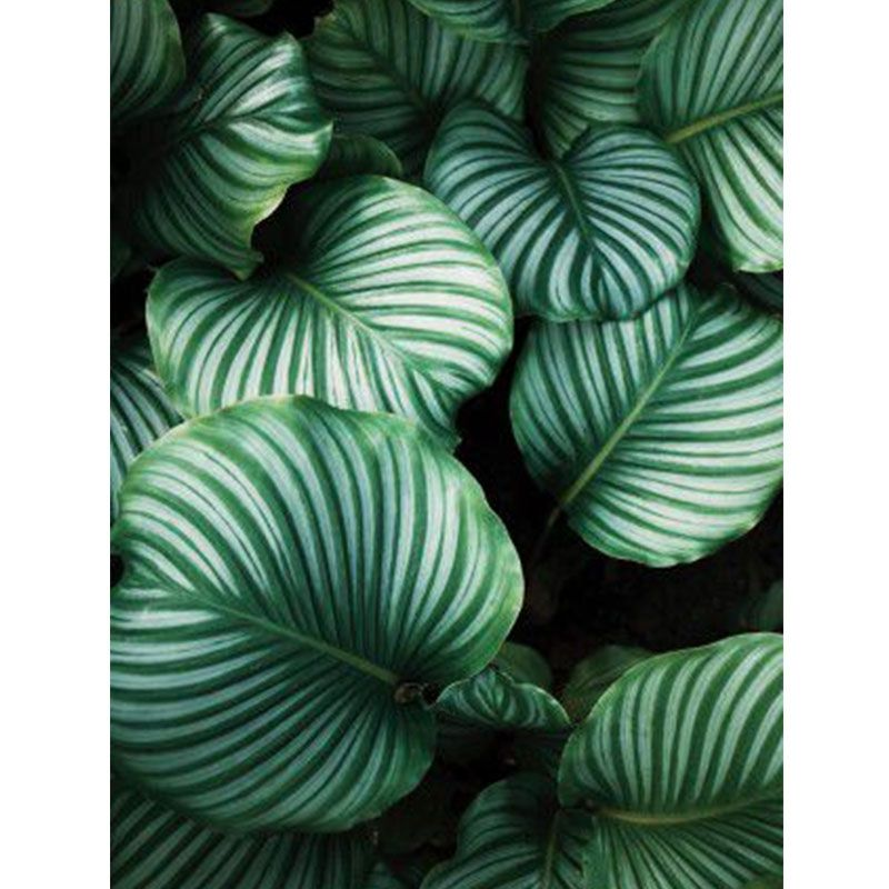 Folhas - Quadro decorativo em canvas