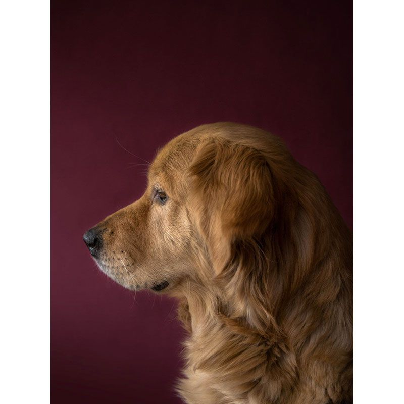 Quadro decorativo em canvas - Cachorro Oliver