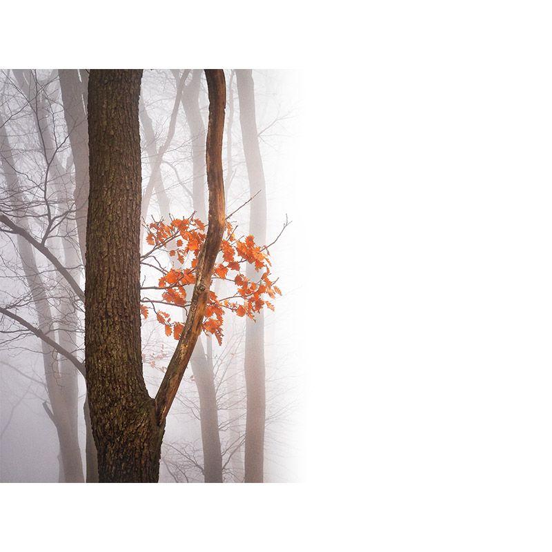 Quadro decorativo em canvas - Folhas laranjas