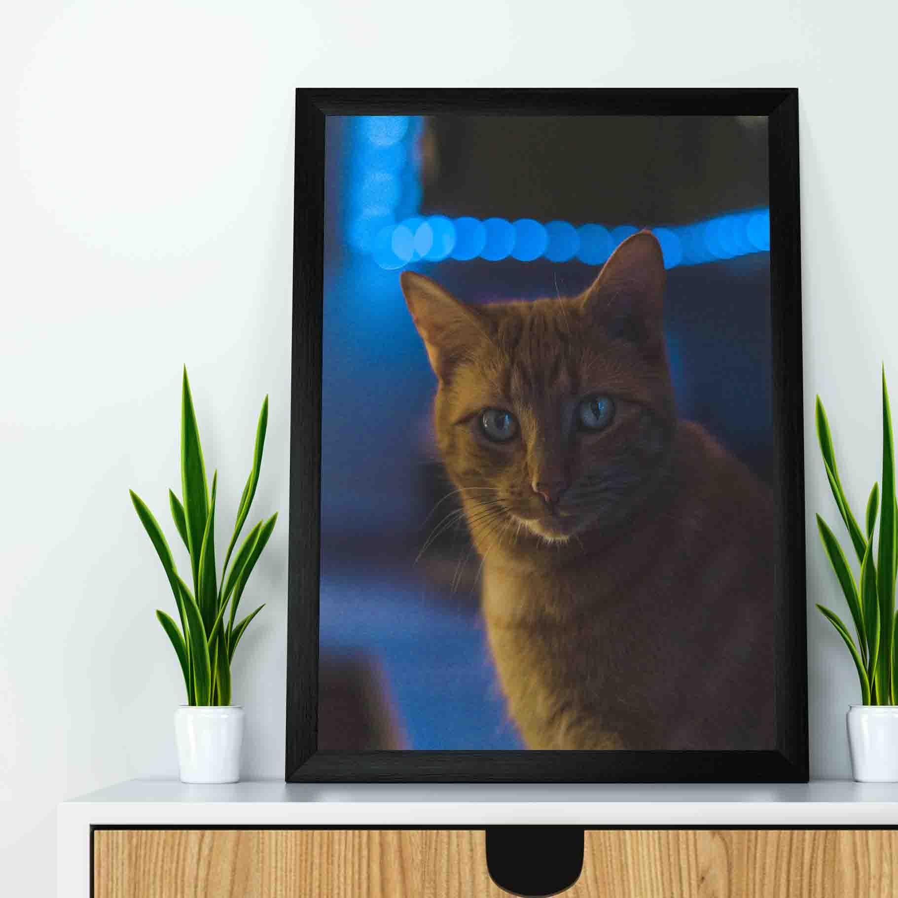 Quadro decorativo em canvas - Gato