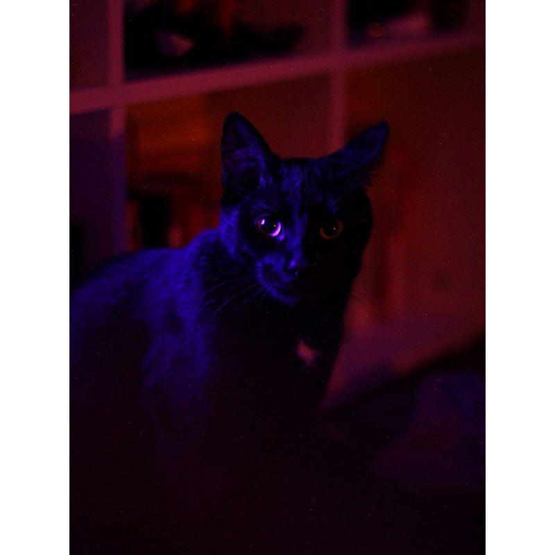 Quadro decorativo em canvas - Gato Salem
