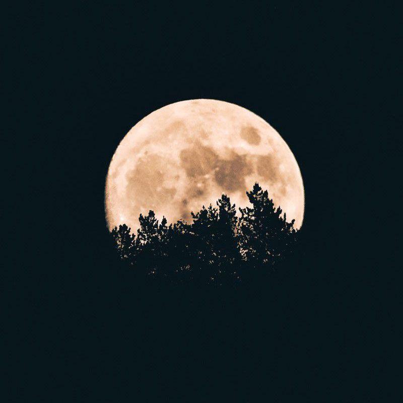 Quadro decorativo em canvas noite Sombra Lunar