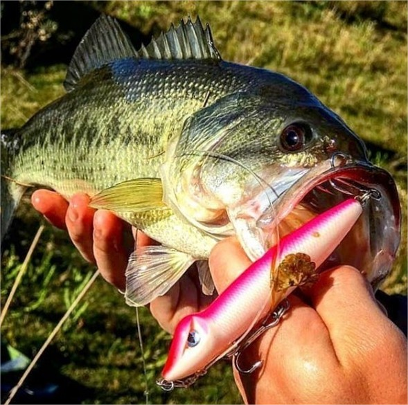 Isca Nakamura Zaracare 120  - Pró Pesca Shop