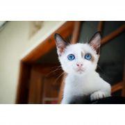 kit Cat Baby
