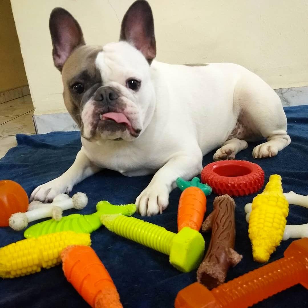 Brinquedo Graveto Nylon Buddy Toys