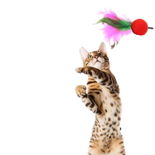 Brinquedo Varinha com Bolinha e Penas para Gato