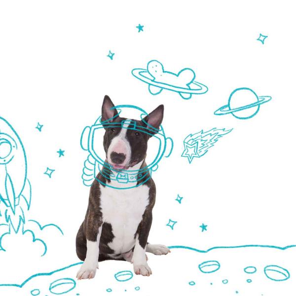 Eco Tapete Higiênico Ultra Slim Dog's Care