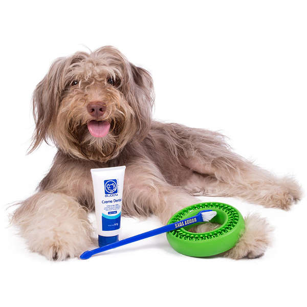 Kit Buddy Toys Dental para Cães e Gatos