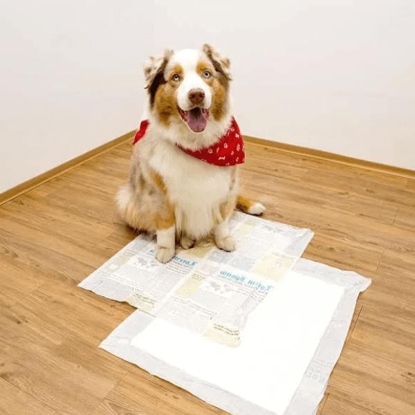 Tapete Higiênico Descartável The New York Dogs 14 e 30 unidades - Médio