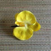Bico de Papagaio Preto Orquídea Amarela