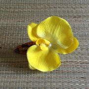 Bico de Pato Tartaruga Orquídea Amarela