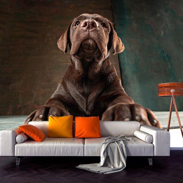 Adesivo de Parede 3D Cachorro Painel Fotográfico F188