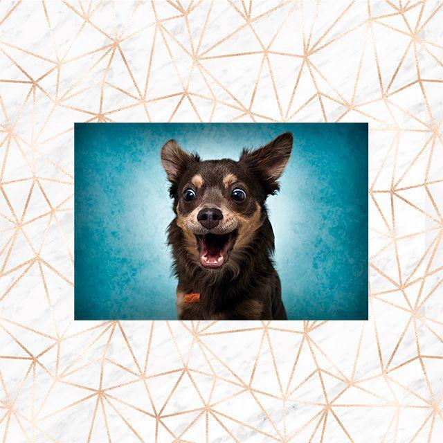 Poster Decorativo Cachorro PL482