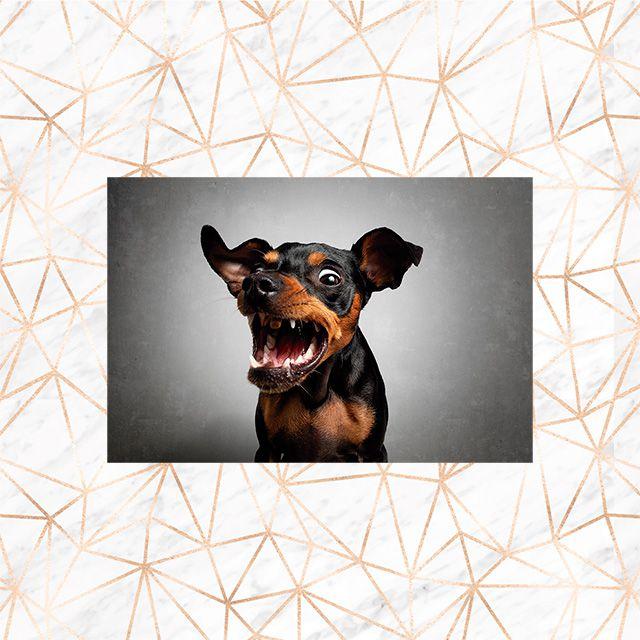 Poster Decorativo Cachorro PL483