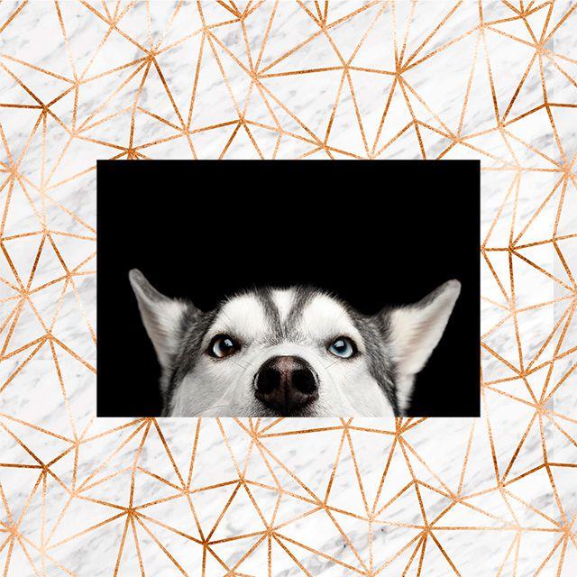 Poster Decorativo Cachorro Rask PL454