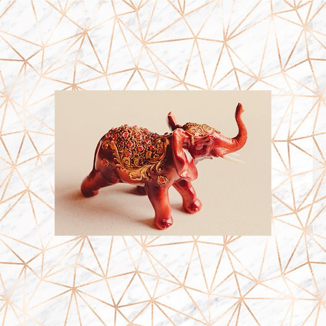 Poster Decorativo Elefante Indiano PL463