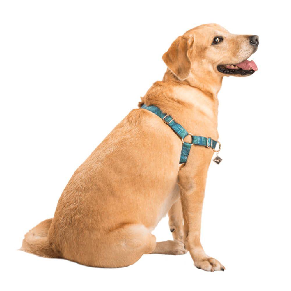 Peitoral Educativo Dog U Amazônia  - Focinharia