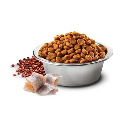 Ração Farmina N&D Quinoa Skin & Coat Peixe para Gatos Adultos  - Focinharia