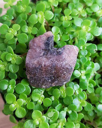 Pedra da Cruz, Quiastolita ou Andaluzita 3,5 cm