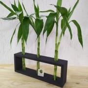 Arranjo em Madeira e 3 Tubos de Vidro com 6 Hastes de Bambu da Sorte