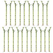 Kit com 21 Hastes de Bambu da Sorte (Médio)
