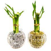 Par de Vasos Redondos com Cinco Hastes de Bambu da Sorte (Energia da Lua e do Sol)