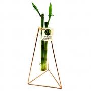 Suporte em Metal e Vaso de Vidro com Bambu da Sorte (Triângulo)
