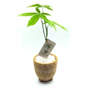 Vaso em Cerâmica Tupi com Árvore do Dinheiro (Média)