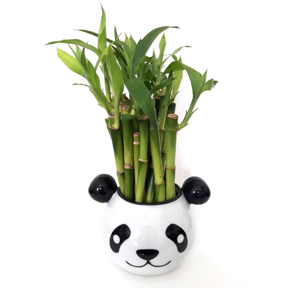 Cachepot Panda em Cerâmica com 21 Hastes de Bambu da Sorte