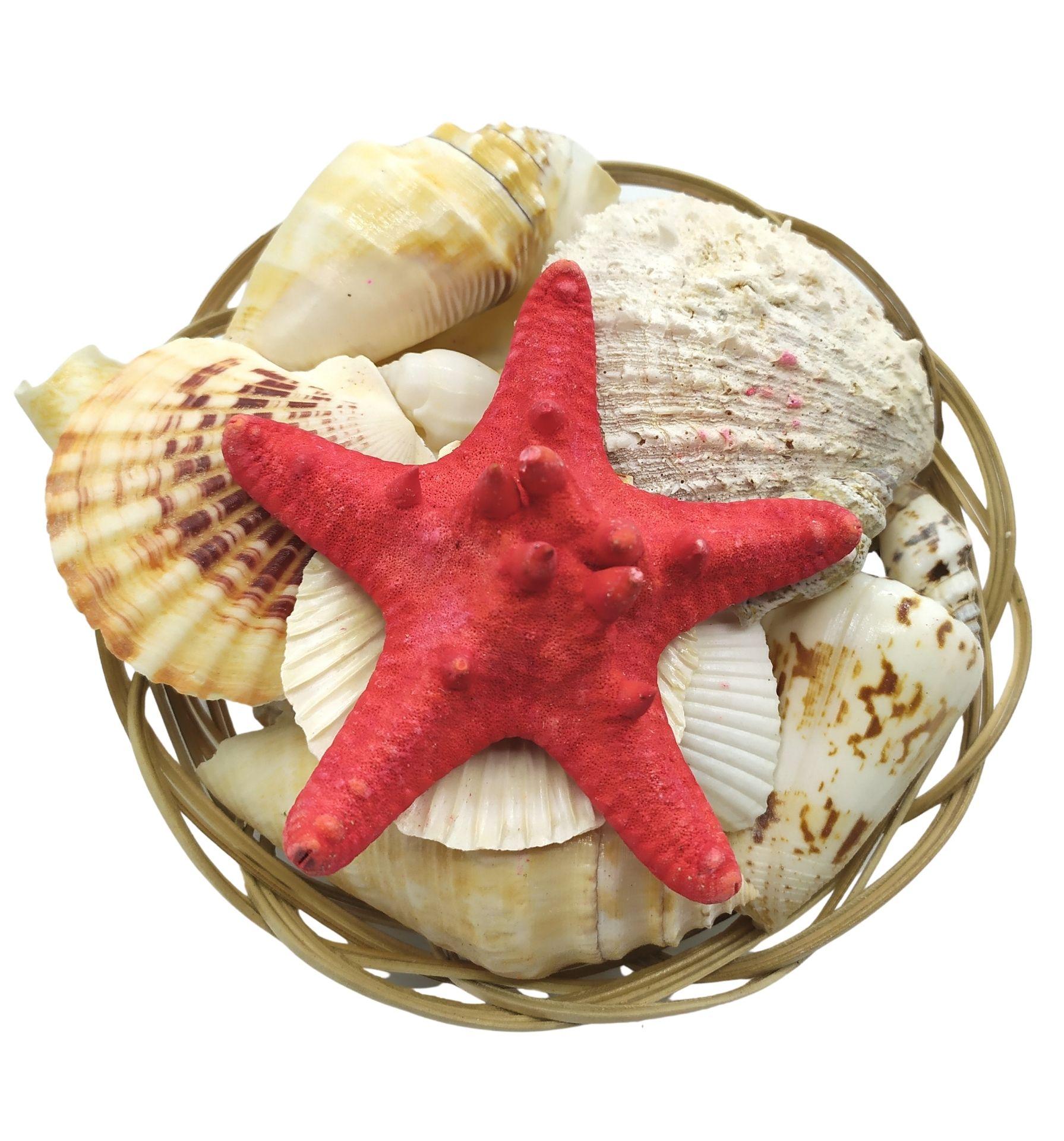 Cestinha de Conchas e Caracóis do Mar (200g)