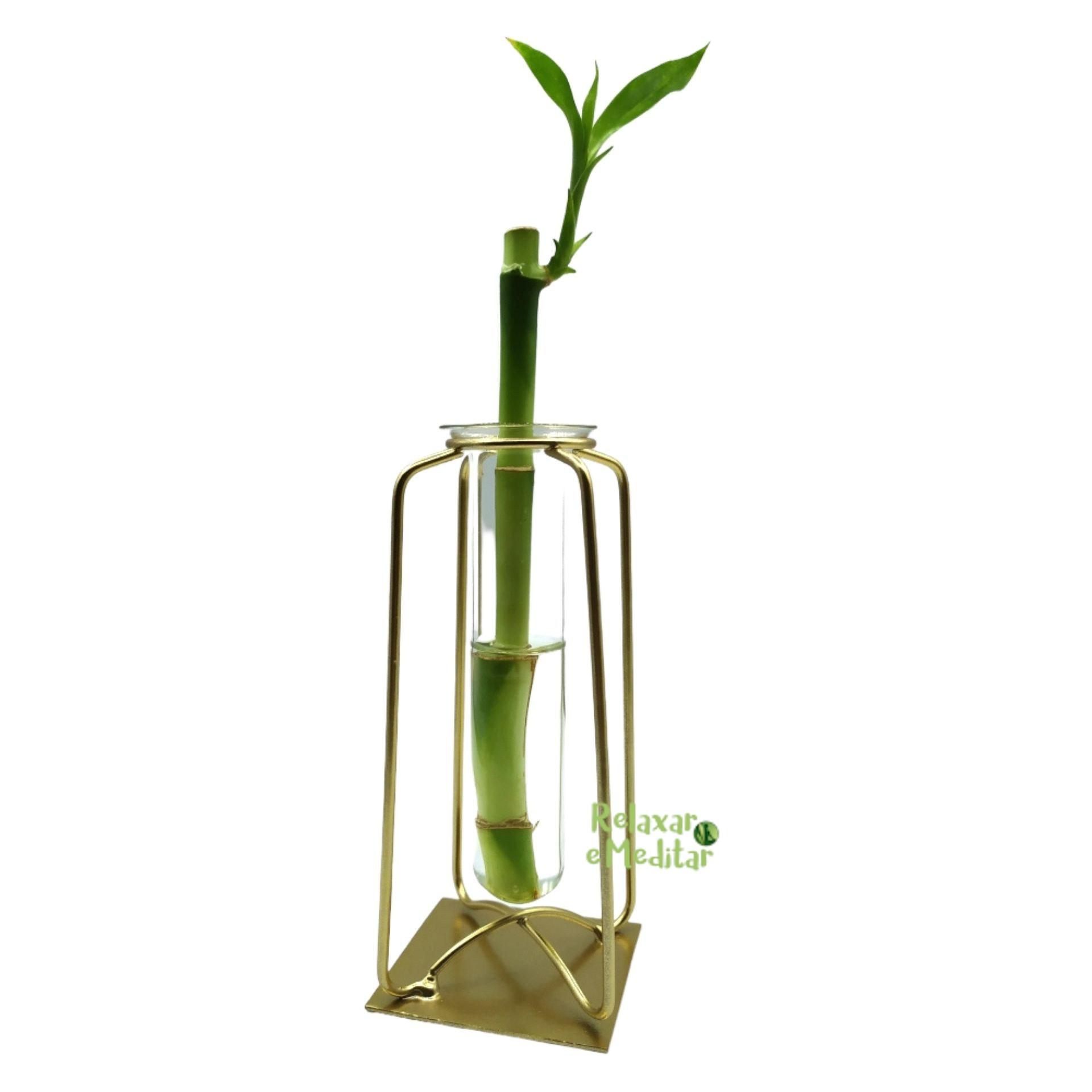 CÓPIA - Suporte em Metal e Vaso de Vidro com Bambu da Sorte (Gato)