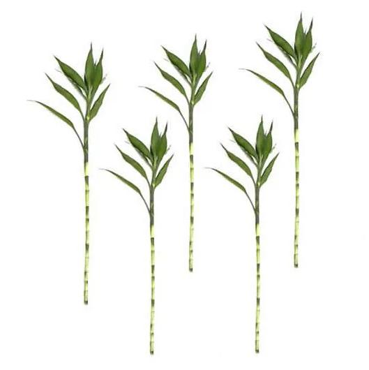 Kit com 5 Hastes de Bambu da Sorte (Extra Grande)