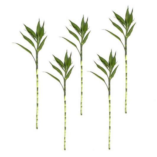 Kit com 5 Hastes de Bambu da Sorte (Grande)