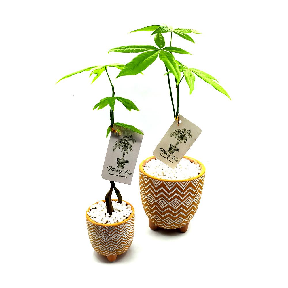 Kit com Dois Vasos em Cerâmica Tupi com Árvore do Dinheiro