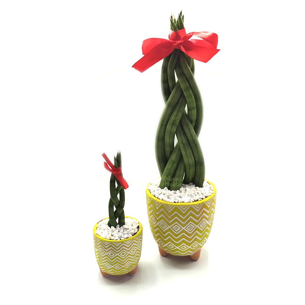 Kit com Dois Vasos em Cerâmica Tupi com Lança de São Jorge Trançada