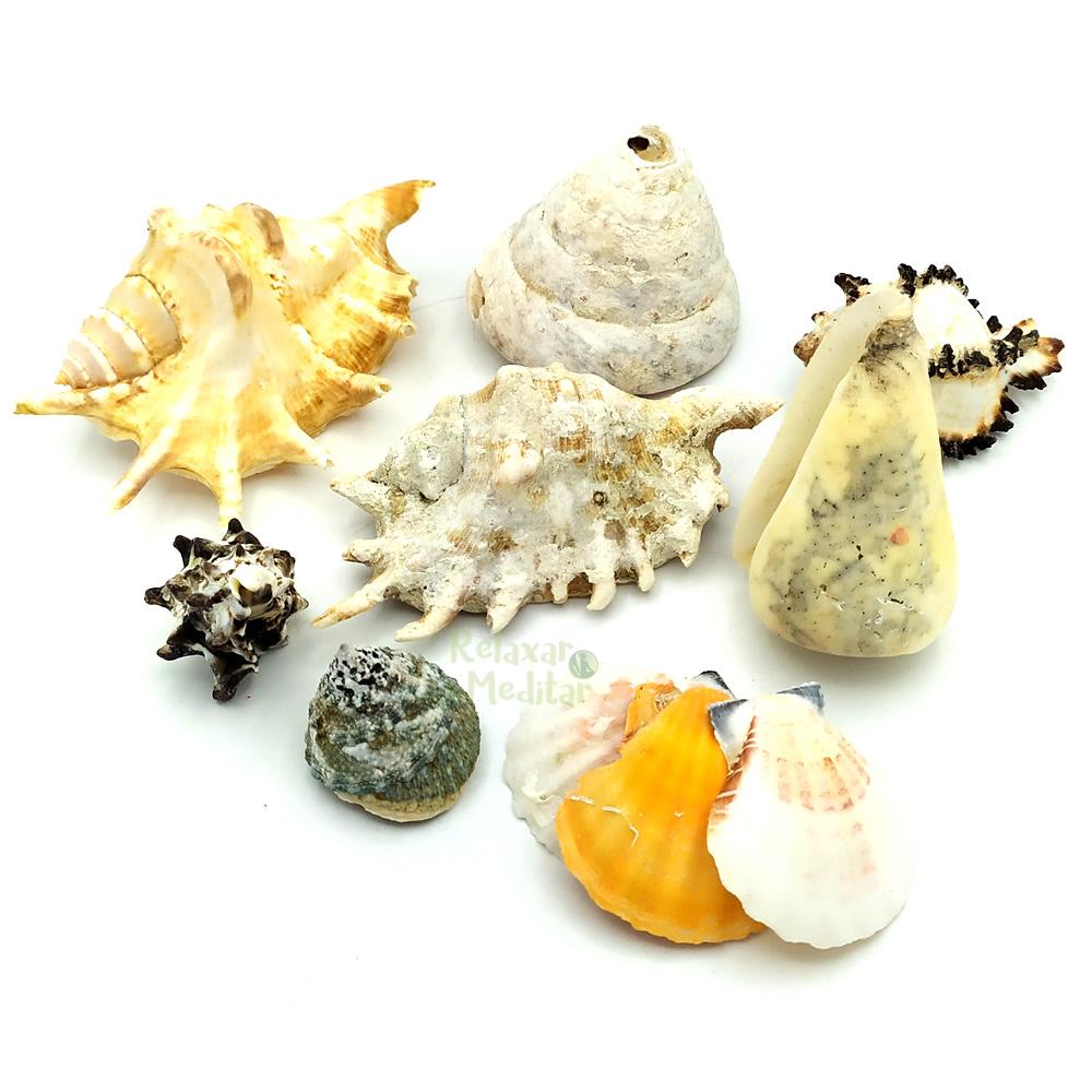 Kit de Conchas e Caracóis do Mar Grande (400g)