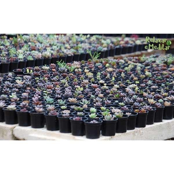 Mini Vasinho com Suculentas (Kit com 10 unidades)