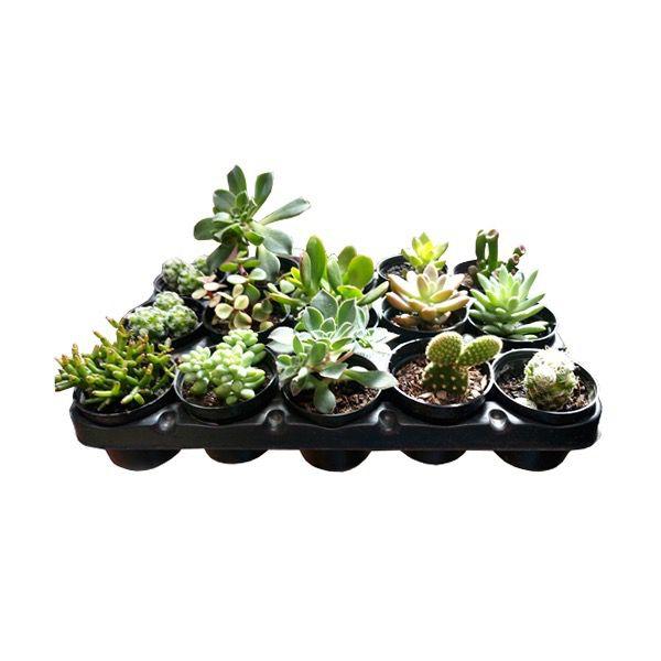 Mini Vasinho com Suculentas (Kit com 5 unidades)