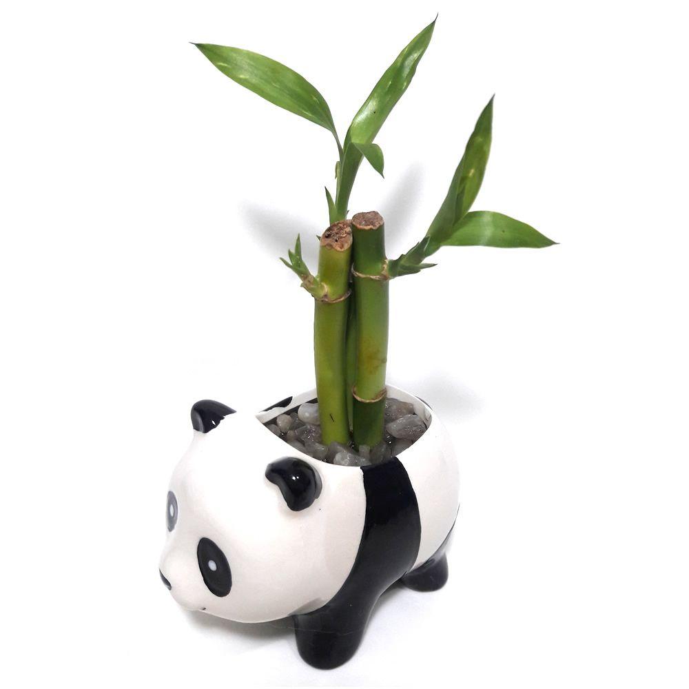 Panda em Cerâmica com Três Bambus da Sorte (Lucky Bamboo)